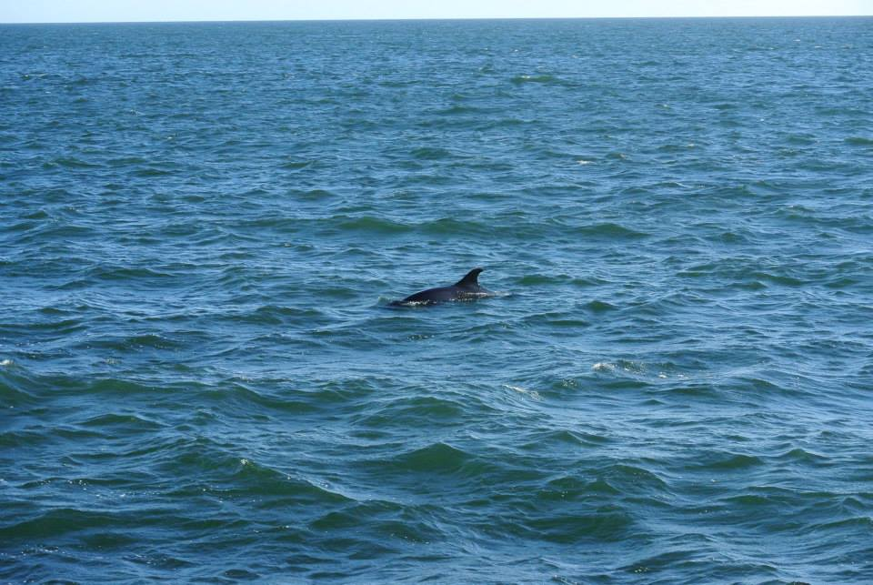 sado, golfinhos, setúbal, estuário