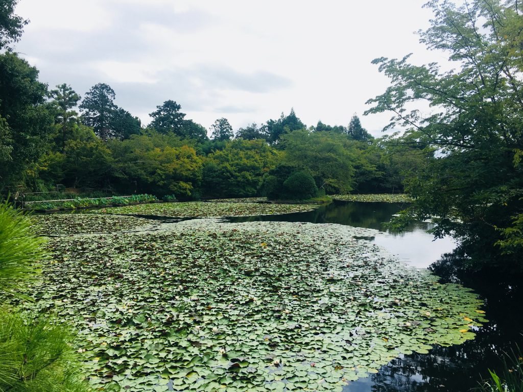 quioto japão jardins